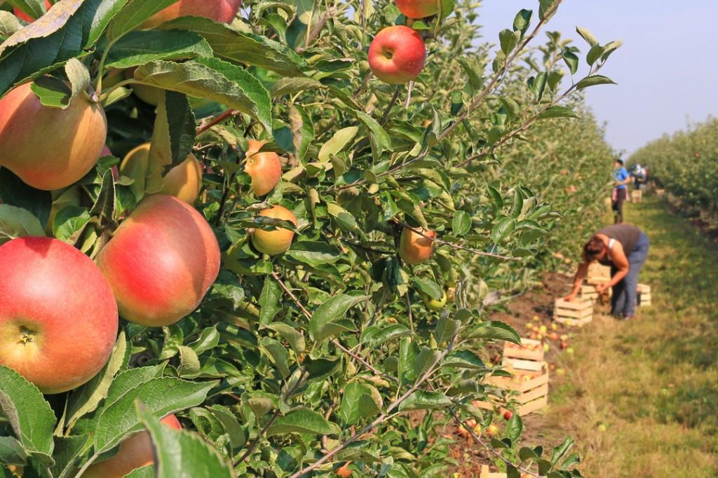 3-11_Orchard